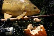 'Oberflächenspannung': Karpfenangeln mit Schwimmbrot