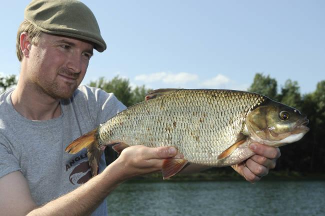 Ein toller Sommerfisch, der an leichtem Gerät heiße Drills liefert ist der Aland.