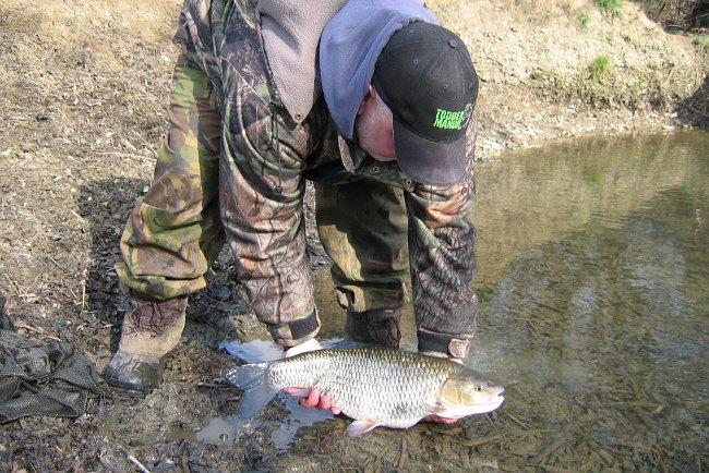Iain setzt einen 7lb 1oz Döbel behutsam zurück. In Großbritannien ist es selbstverständlich, dass kapitale Fische nach dem Fang schonend zurückgesetzt werden. Nur auf diese Weise ist es möglich, gute Fischbestände trotz hohen Angeldrucks zu erhalten.